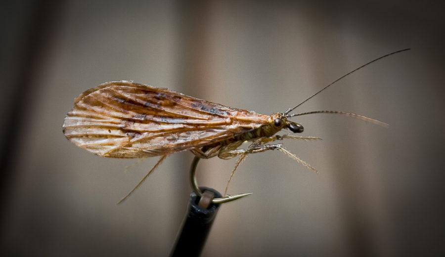 Halesus Tesselatus Realistic Caddis Fly
